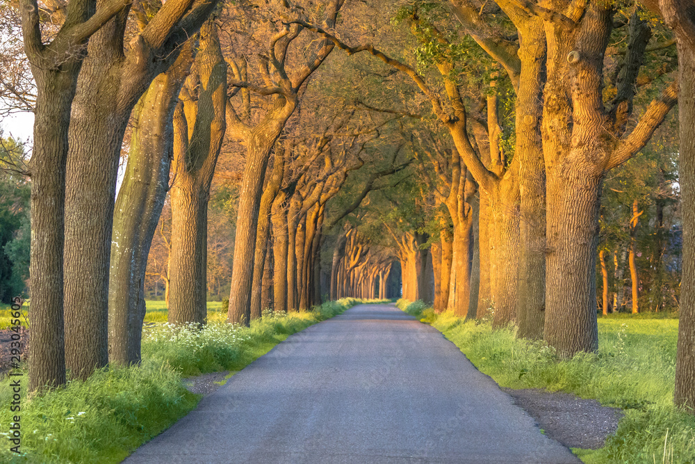 country road with Oak lane