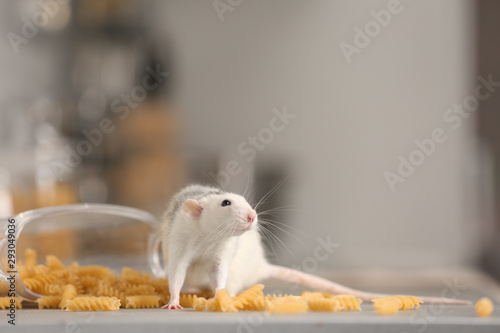 Fotografie, Obraz  Rat near open container with pasta on kitchen counter