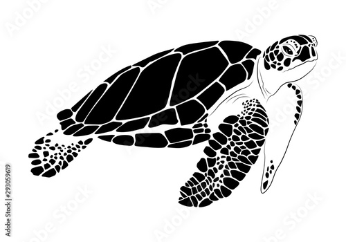 Fototapeta  graphic sea turtle,vector illustration of sea turtle
