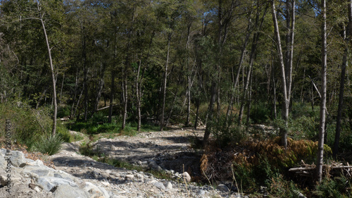rocky path in the forest
