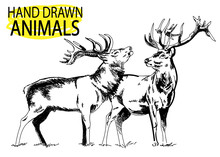 Deer Head. A Set Of Images. Drawing By Hand In Vintage Style. Deer With Big Horns.