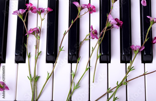Little pink flowers on the piano keyboard Wallpaper Mural