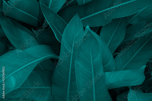 Fotografia Creative layout made of green leaves. Flat lay. Nature background