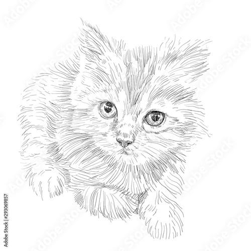 Photo sur Toile Croquis dessinés à la main des animaux Drawing of adorable cat lying on white background.