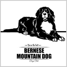 Bernese Mountain Dog - Vector Illustration For T-shirt, Logo And Template Badges