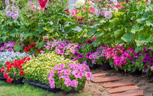 Brick Walkway With Beautiful Flowers On Side In Flower Garden