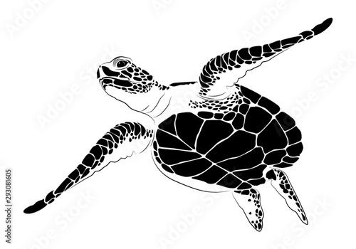 graphic sea turtle,vector illustration of sea turtle Canvas Print