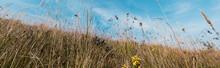 Panoramic Shot Of Yellow Bloom...