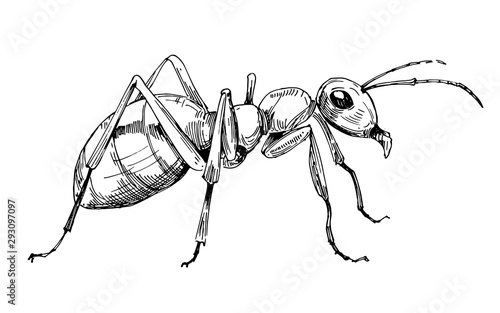 Photo Ant sketch. Hand drawn illustration converted to vector