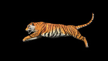 Bengal Tiger Jump In The Air P...