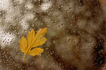 There Are Wet Drops On The Window After Rain. Autumn Yellow, Beautiful Leaf Stuck To The Wet Window. Photo With A Blurry Background In Cold And Warm Tint.