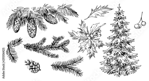 Winter plants: holly, cones, spruce Slika na platnu