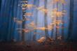 Leinwandbild Motiv fantasy moody forest in autumn
