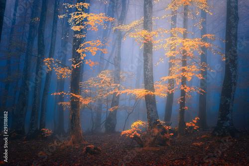 Fotografie, Obraz fantasy moody forest in autumn