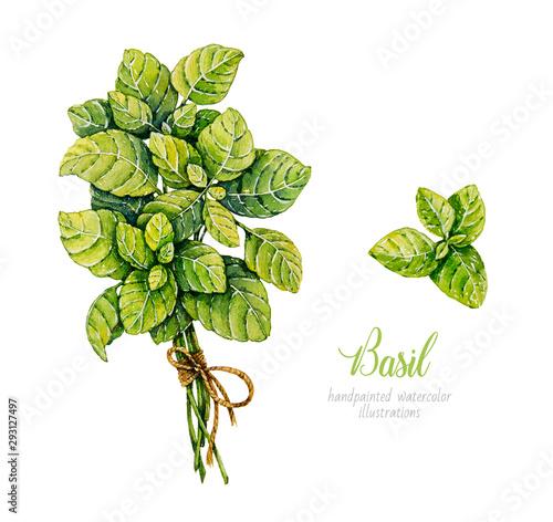 Fototapeta Watercolor basil. Herbs. Watercolor botanical hand drawn illustration. Bunch of basil obraz
