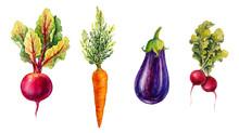 Vegetables. Watercolor Illustr...