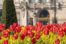Telephoto Shot Of Flowers In Front Of Buckingham Palace,