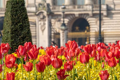 Photo Telephoto shot of flowers in front of Buckingham Palace,