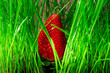 canvas print picture - big red strawberry berry in green grass. bright colours
