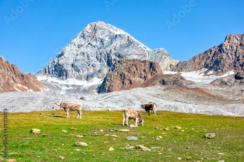 Italy mountains Ortler