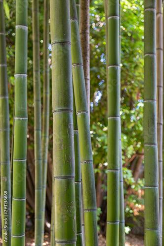 Bamboo with graffiti in Rome Italy