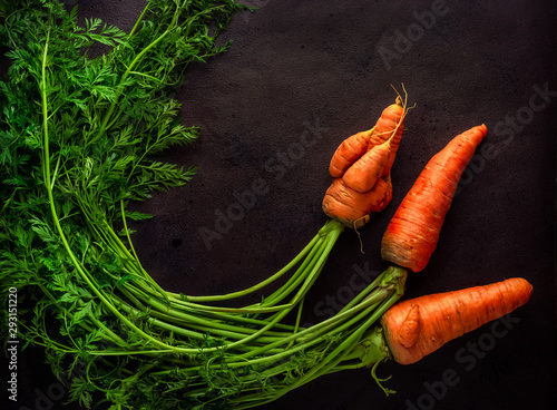Three homegrown carrots with tops including some ugly ones on dark background