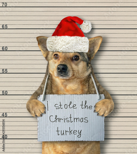 The dog in a red Santa Claus hat was arrested. There is a poster on his neck that says