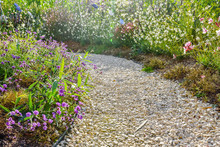Small Pebble Path In A Beautiful Flower Garden