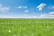 frisch gemähter Rasen unter blauem Himmel