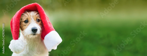 Photo Cute happy christmas pet dog puppy with santa hat, web banner with copy space