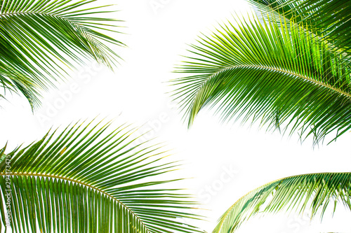 Palmier tropical palm leaf background, coconut palm trees perspective view