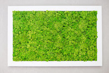 Green Moss On The Wall In The ...