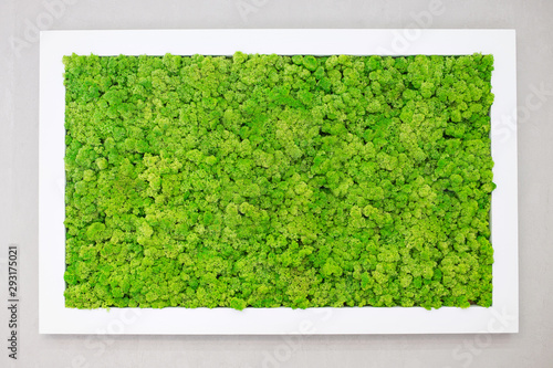Fototapeta Green moss on the wall in the form of a picture. Beautiful white frame for a picture. Ecology. obraz