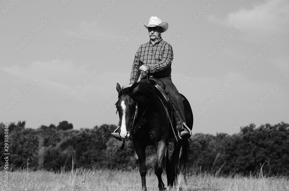 Fototapety, obrazy: Western lifestyle image in black and white of cowboy riding horse through Texas field.
