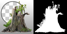Cut Out Tree Stump. Old Tree S...
