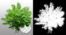 Green Shrub. Bush Of Leafy Bra...