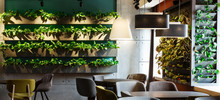 Floral Interior In Modern Cafe With Plants In Decoration Pots
