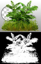 Mix Of Wild Grass And Fern Plants Isolated On Transparent Background Via An Alpha Channel Of Great Precision. High Quality Clipping Mask For Professional Composition.