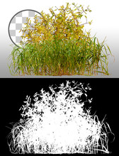 Mix Of Grass And Wild Plants Isolated On A Transparent Background Via An Alpha Channel Of Great Precision. High Quality Clipping Mask For Professional Composition.