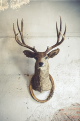 Deer head on the wall. Taxidermy animal of a deer head and vintage frame on the old rotten brick wall. Vintage style.