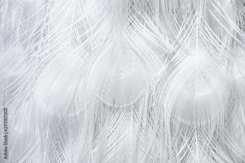 Fotografie, Tablou White peacock