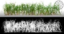 Bunch Of Wild Grass. Blades Of...