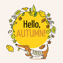 Hello, Autumn, Typography Poster. Greeting Card With Dachshund Puppy And Leaves. Vector  Lettering Holiday Quote.