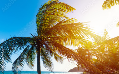 Tuinposter Palm boom Sun shining over Grand Anse beach at sunset