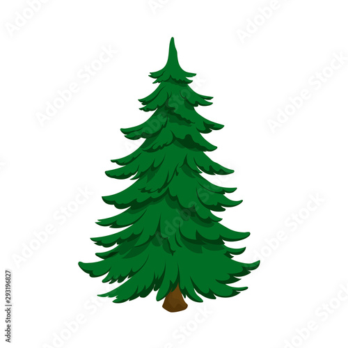 Fototapeta Isolated image of fir. Green pine in cartoon style. Forest tree on white background obraz