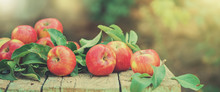 Red Apples On The Wooden Table In Sunlight Close Up. Banner