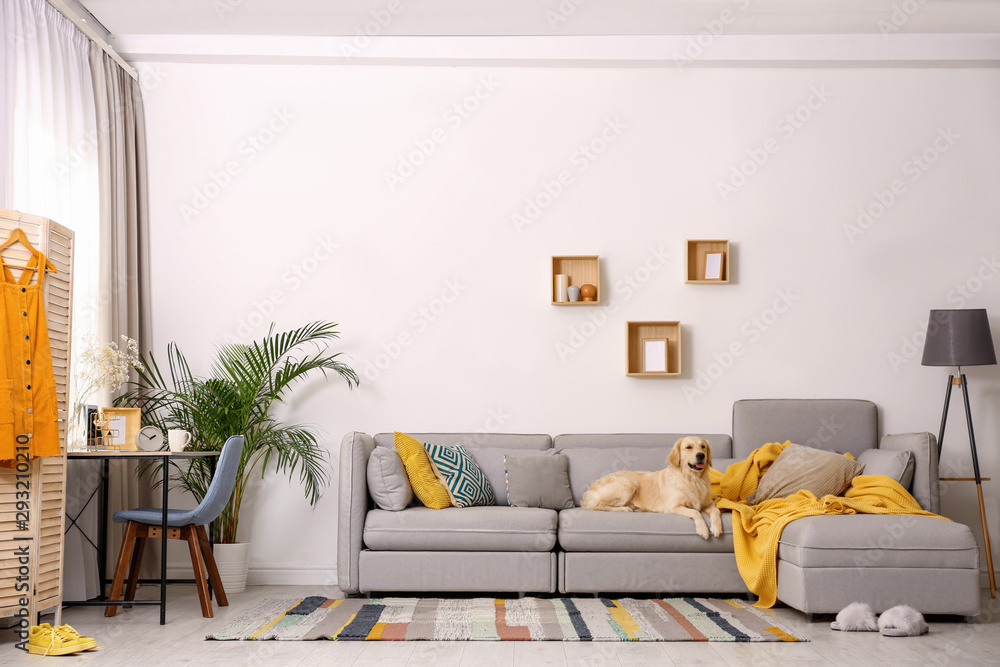 Fototapeta Modern living room interior. Cute Golden Labrador Retriever on couch
