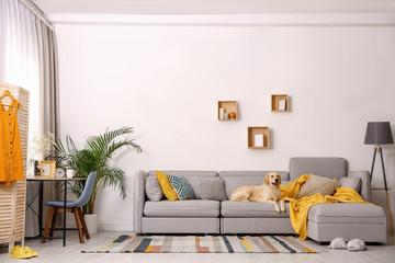 FototapetaModern living room interior. Cute Golden Labrador Retriever on couch