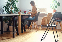 Adorable Persian Cat Is Sitting On The Chair While His Mistress Is Working At The Desc.