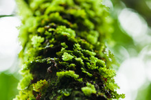 Green Fern Growing On The Tropical Tree.